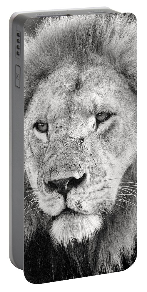 3scape Portable Battery Charger featuring the photograph Lion King by Adam Romanowicz