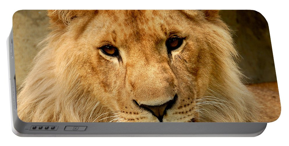 Africa Portable Battery Charger featuring the photograph Lion by TouTouke A Y