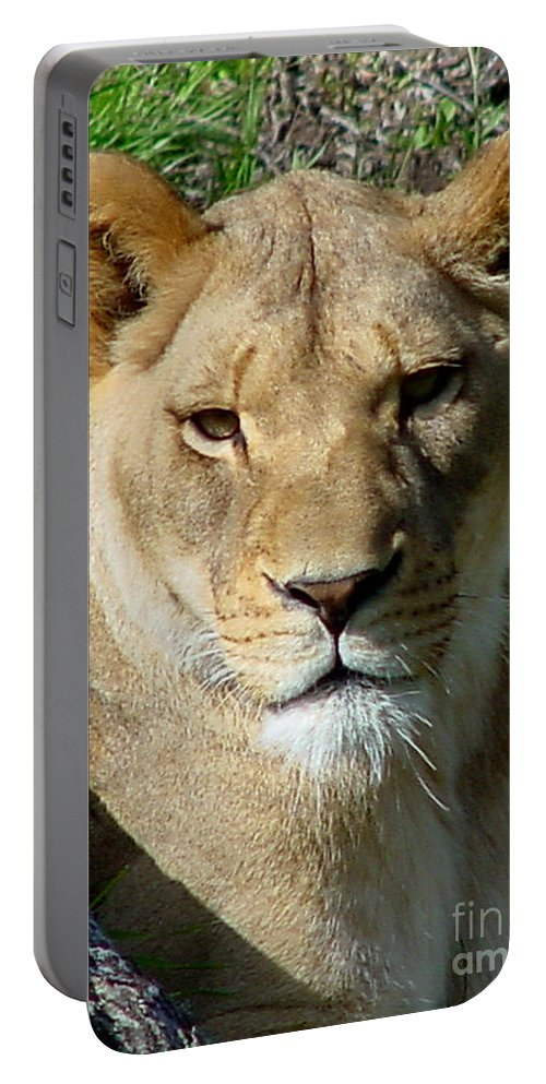 Lion Portable Battery Charger featuring the photograph Lioness by Gary Gingrich Galleries