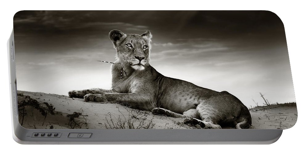 Lion Portable Battery Charger featuring the photograph Lioness on desert dune by Johan Swanepoel