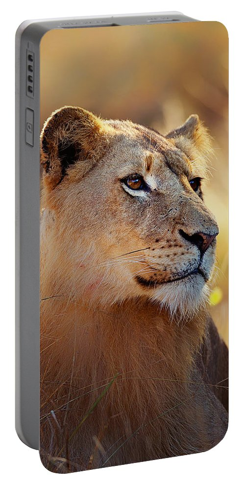 Lion Portable Battery Charger featuring the photograph Lioness portrait lying in grass by Johan Swanepoel