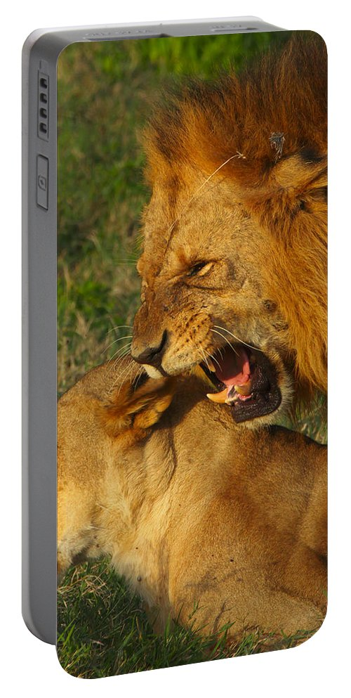 Lions Portable Battery Charger featuring the photograph Roar by Naoki Takyo