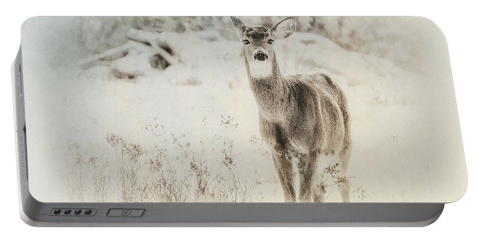 Deer Portable Battery Charger featuring the photograph Listen by Susan Capuano