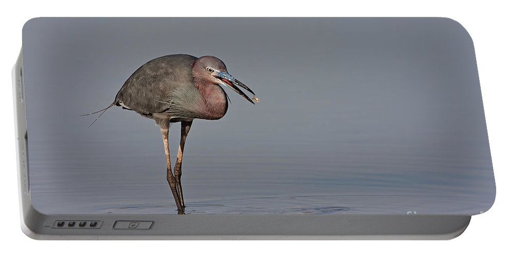 Little Blue Heron Portable Battery Charger featuring the photograph Little Blue Heron by Bryan Keil
