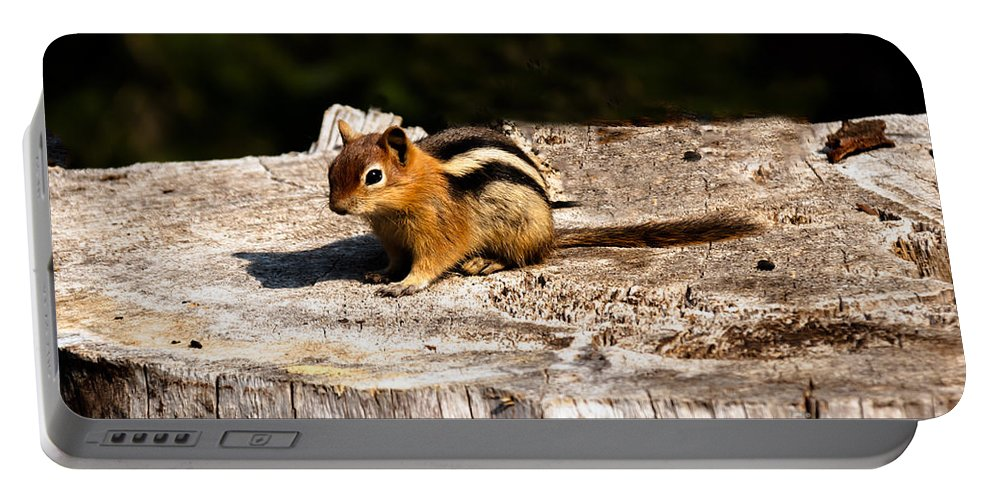 Chipmunk Portable Battery Charger featuring the photograph Little Chipmunk by Robert Bales