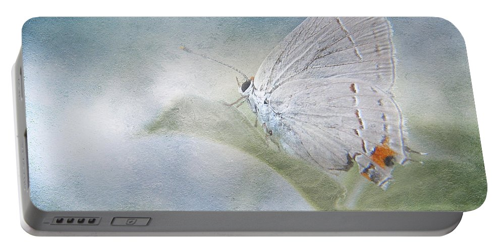 Butterfly Portable Battery Charger featuring the photograph Little Grey Hairstreak by David and Carol Kelly