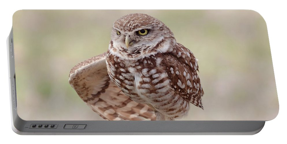 Wildlife Portable Battery Charger featuring the photograph Little One by Kim Hojnacki