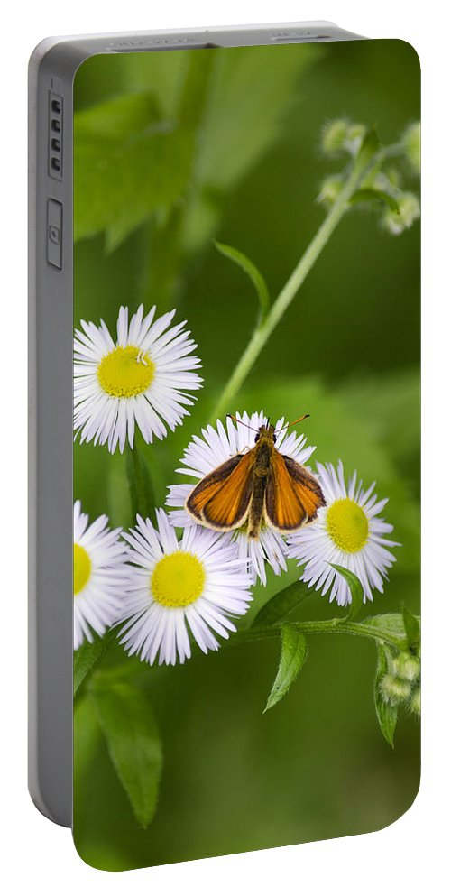 Little Portable Battery Charger featuring the photograph Little Orange Skipper by Christina Rollo