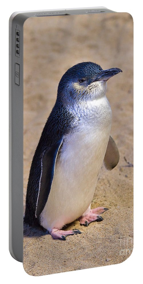 Nature Portable Battery Charger featuring the photograph Little Penguin by Louise Heusinkveld