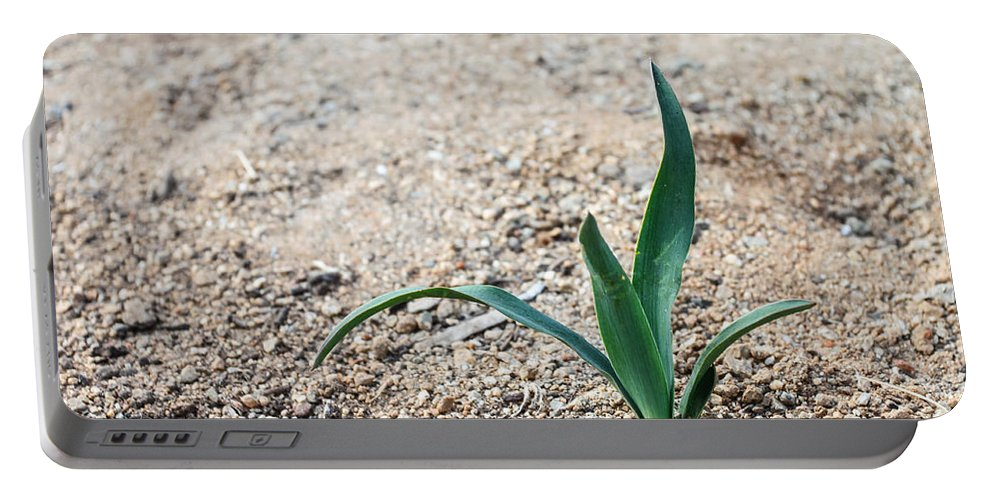 Nature Portable Battery Charger featuring the photograph Little Plant by Henrik Lehnerer