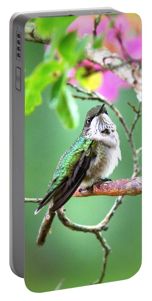Ruby-throated Hummingbird Portable Battery Charger featuring the photograph Little Ruby - 6763-001 by Travis Truelove