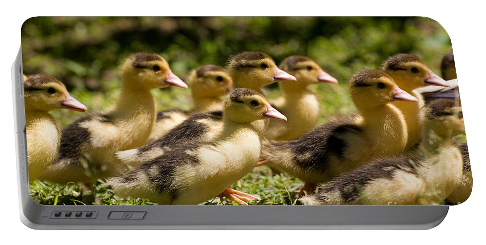 Alive Portable Battery Charger featuring the photograph Yellow Muscovy Duck Ducklings Running Fast by Arletta Cwalina