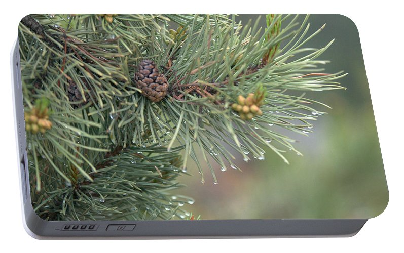 Pine Portable Battery Charger featuring the photograph Lodge Pole Pine In The Fog by Frank Madia