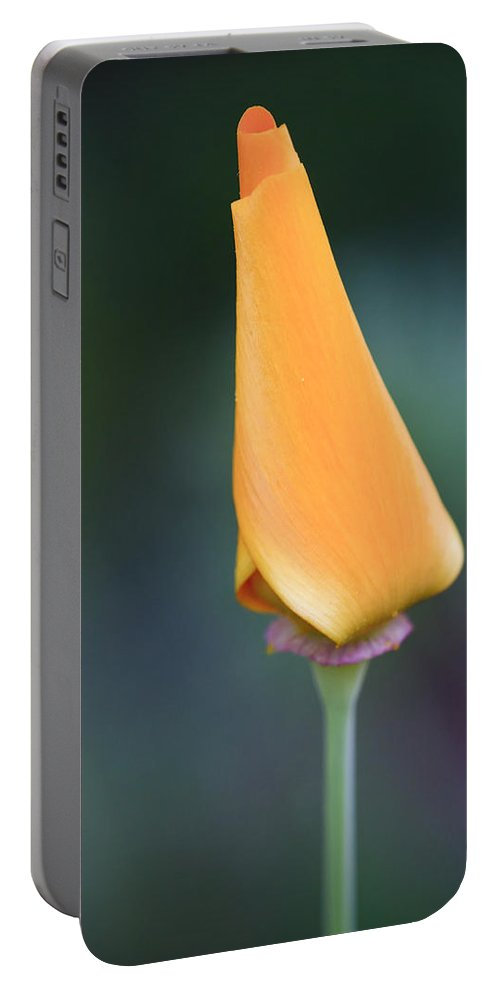 3scape Photos Portable Battery Charger featuring the photograph Lone Bud by Adam Romanowicz
