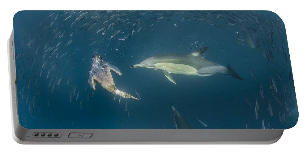 Feb0514 Portable Battery Charger featuring the photograph Long-beaked Common Dolphins And Cape by Pete Oxford