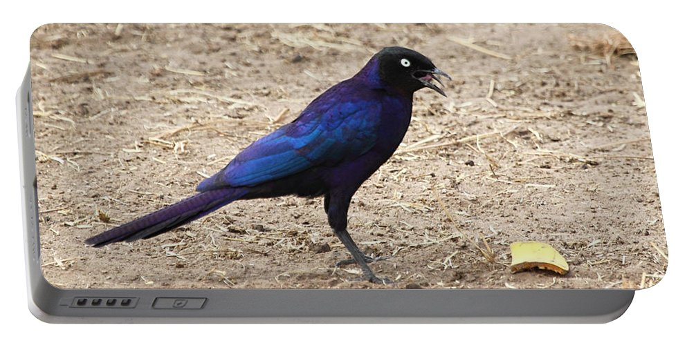Long Tailed Glossy Starling Portable Battery Charger featuring the photograph Long Tailed Glossy Starling by Carole-Anne Fooks