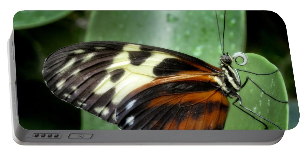 Black Portable Battery Charger featuring the photograph Longwing Butterfly by David and Carol Kelly