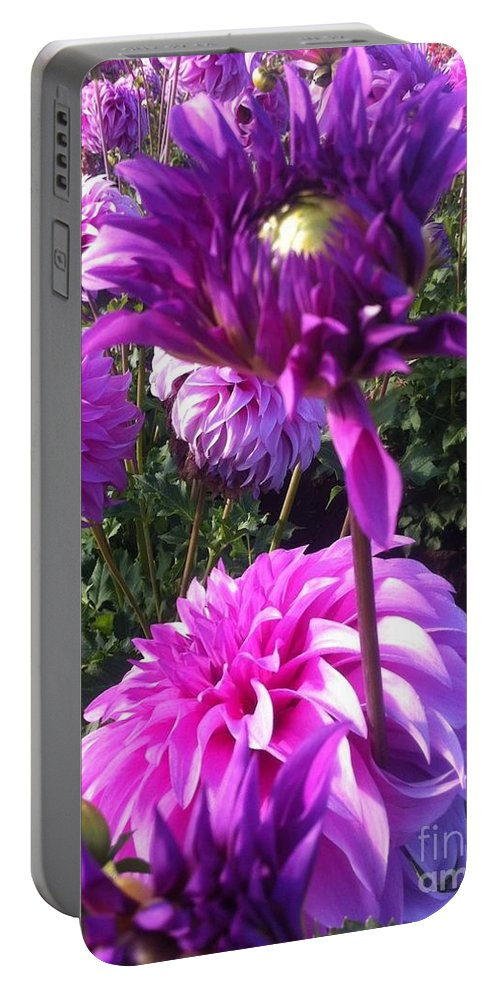 Dahlia Flower Portable Battery Charger featuring the photograph Look At Me Dahlia Flower by Susan Garren