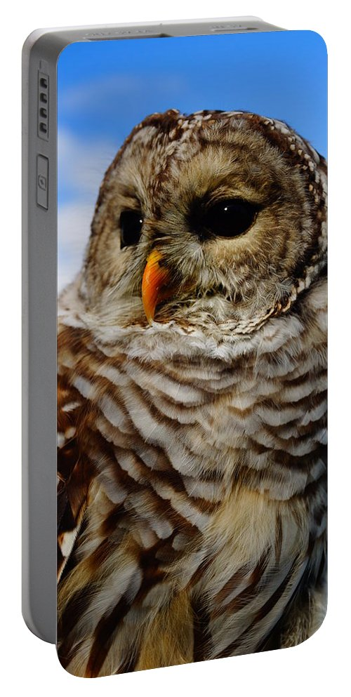 Owls Portable Battery Charger featuring the photograph Look At Me. I'm The Captain Now by Jeffery L Bowers