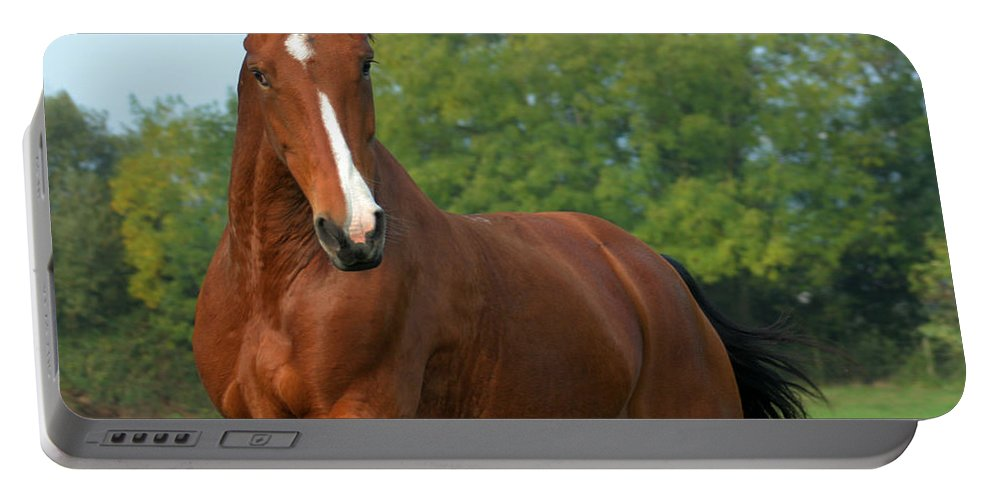 Horse Portable Battery Charger featuring the photograph Look How Pretty I Am by Angel Ciesniarska