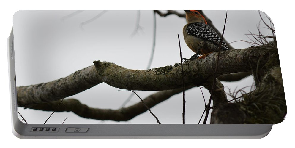 Florida Portable Battery Charger featuring the photograph Looking Up by Linda Kerkau