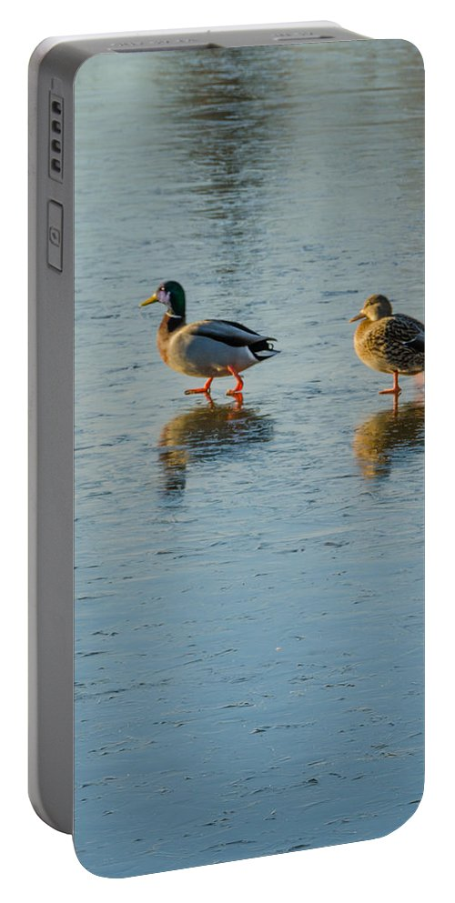 Alaska Portable Battery Charger featuring the photograph Lost by Nikolai Martusheff