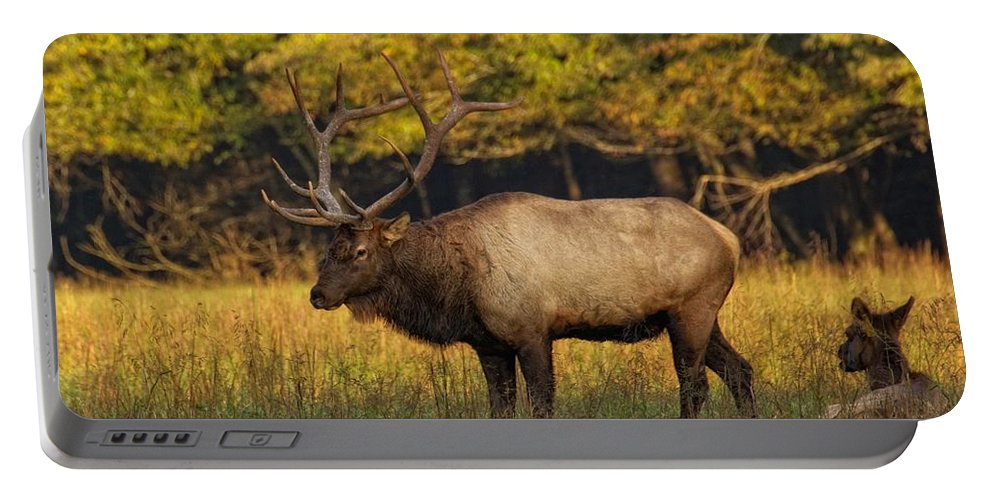 Bull Elk Portable Battery Charger featuring the photograph Love In The Air by Mel Hensley