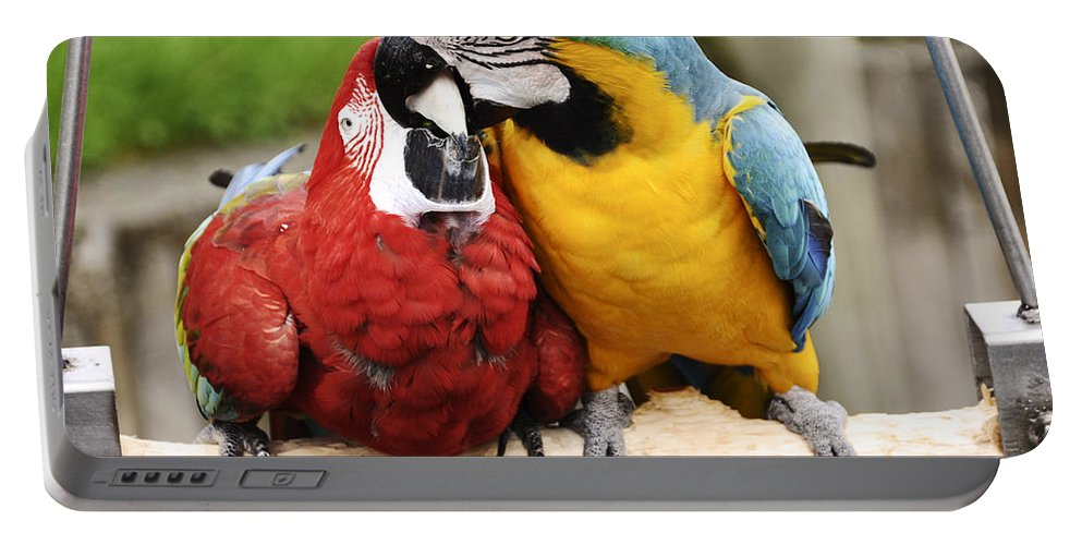 Birds Portable Battery Charger featuring the photograph Love Parrotts by Safe Haven Photography Northwest