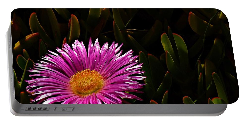 Hottentot Fig Marigold Portable Battery Charger featuring the photograph Loving The Sun by Clare Bevan