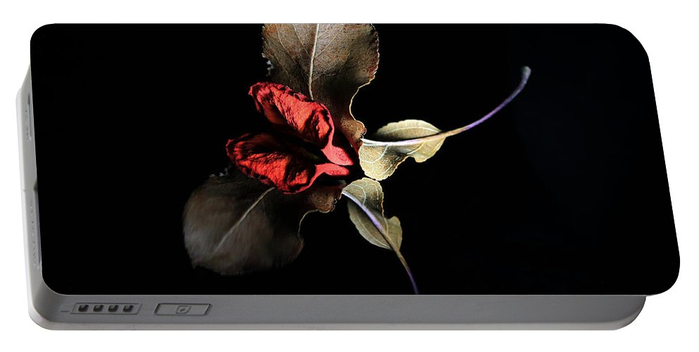 Rose Portable Battery Charger featuring the photograph Lr 002 by Dawn Marshall