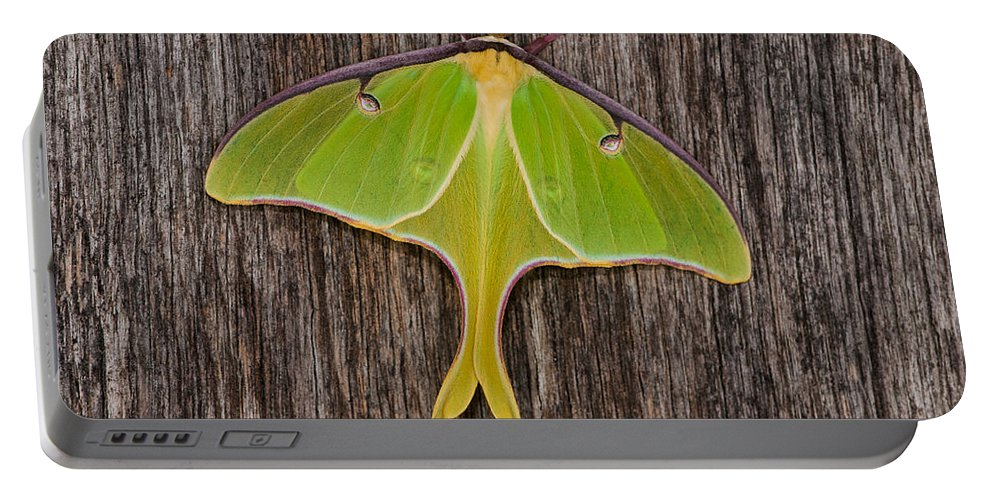 Moth Portable Battery Charger featuring the photograph Luna Moth by Randy Walton