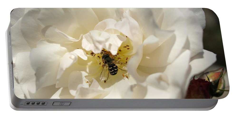 White Rose Portable Battery Charger featuring the photograph Lunch by Jacklyn Duryea Fraizer