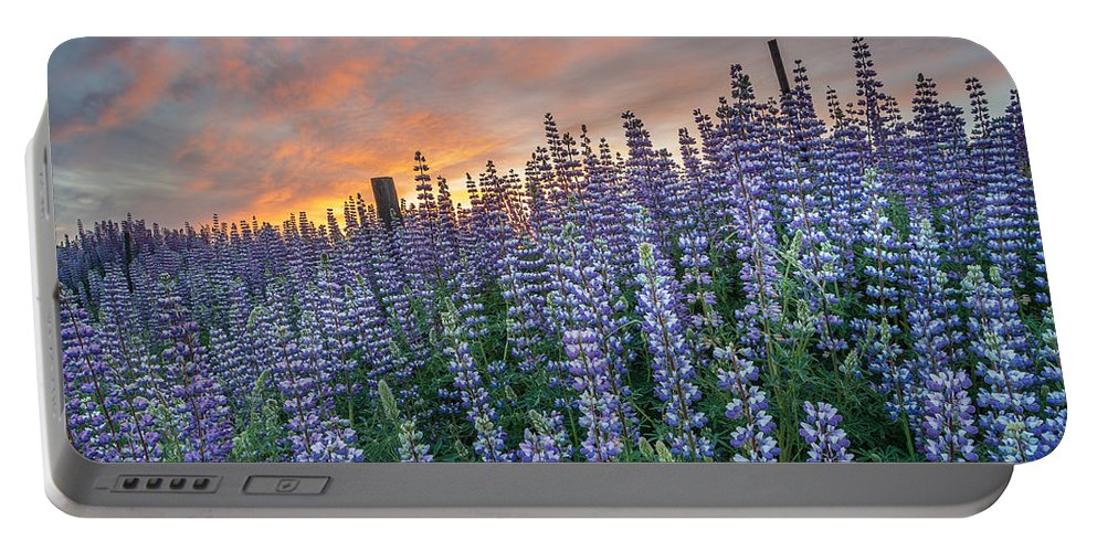 Lupine Portable Battery Charger featuring the photograph Lupine Dawn by Greg Nyquist