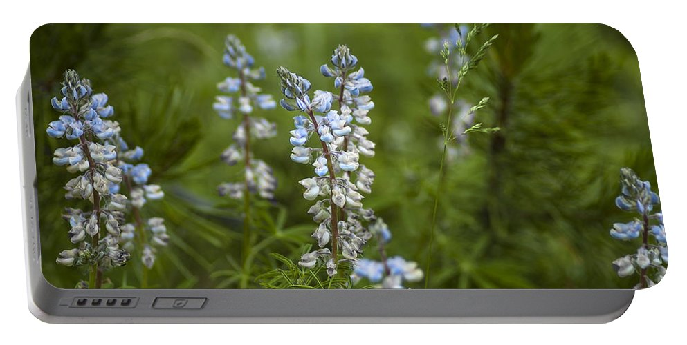 Colorado Portable Battery Charger featuring the photograph Lupine by Kim Upshaw