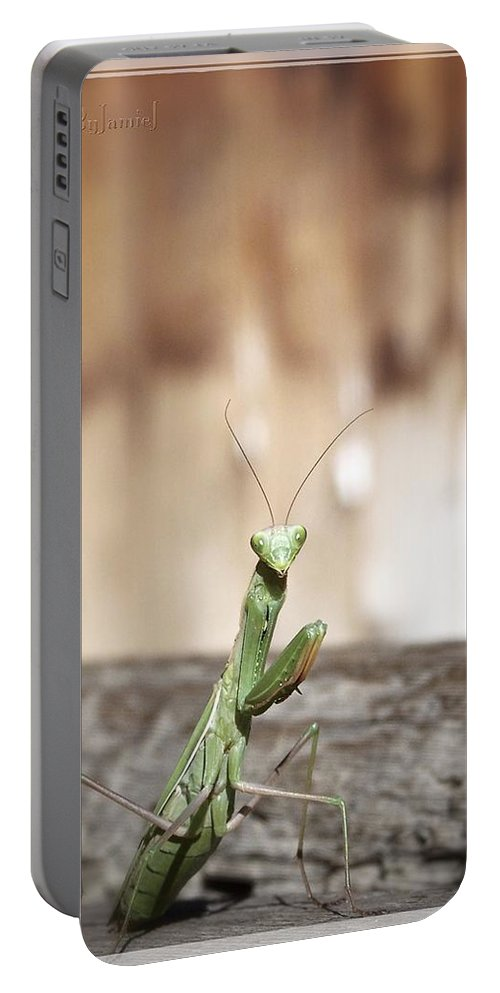 Praying Mantis Portable Battery Charger featuring the photograph Madame Mantis by Jamie Johnson