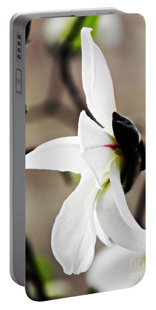 Magnolia Portable Battery Charger featuring the photograph Magnolia In Profile by Sarah Loft