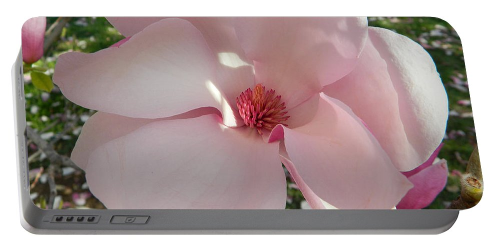Magnolia Surprise Portable Battery Charger featuring the photograph Magnolia Surprise by Emmy Marie Vickers