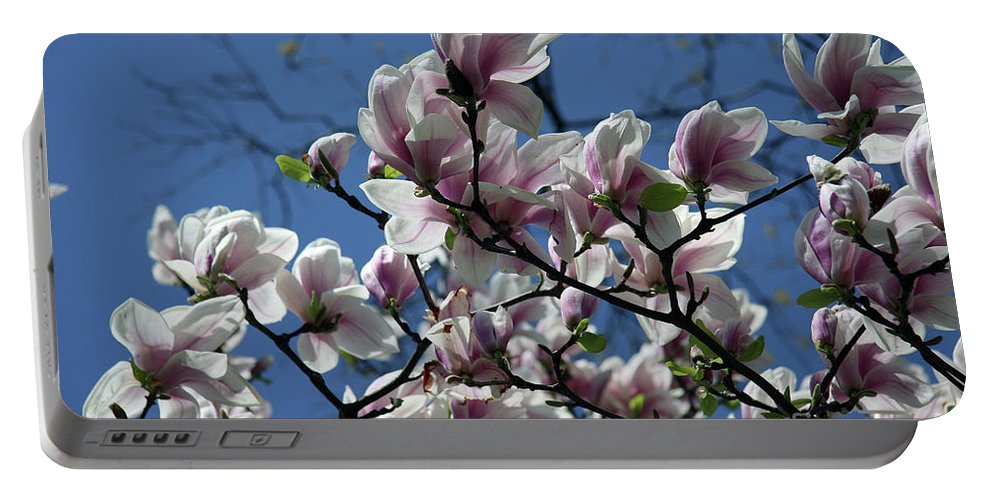 Magnolia Portable Battery Charger featuring the photograph Magnolia Twig by Christiane Schulze Art And Photography