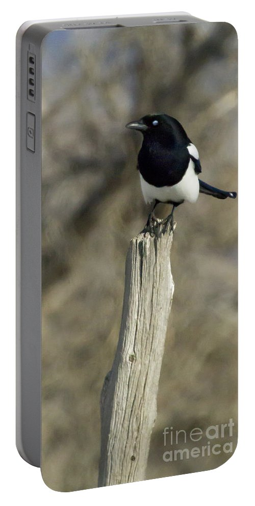 Magpie Portable Battery Charger featuring the photograph Magpie  #0627 by J L Woody Wooden