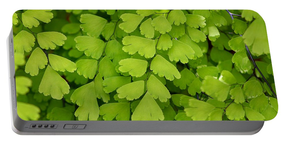 Fern Portable Battery Charger featuring the photograph Maidenhair Fern by Art Block Collections