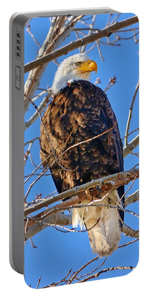 Bald Eagle Portable Battery Charger featuring the photograph Majestic Bald Eagle by Greg Norrell