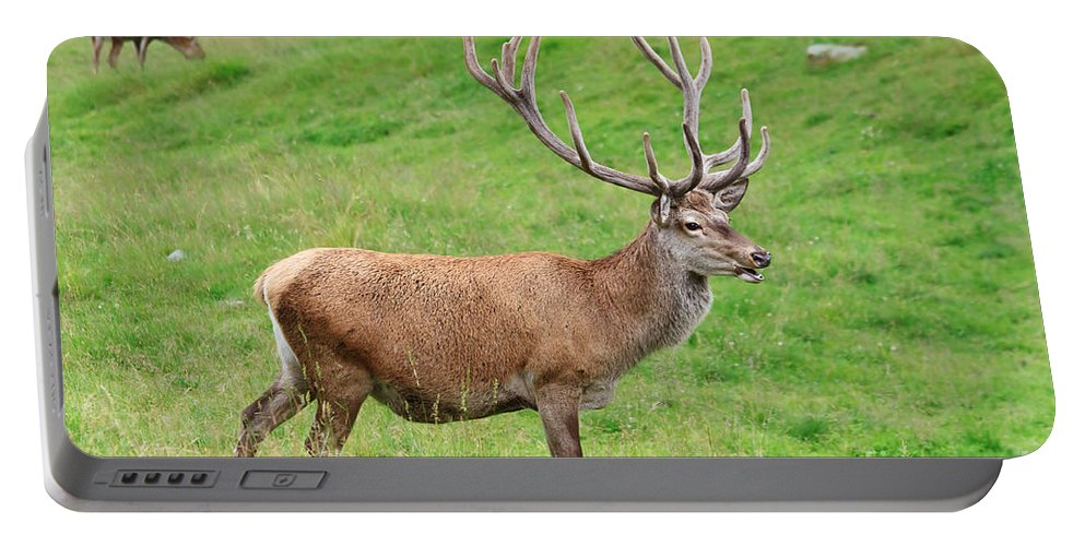 Animal Portable Battery Charger featuring the photograph Male Deer On Field by Antonio Scarpi
