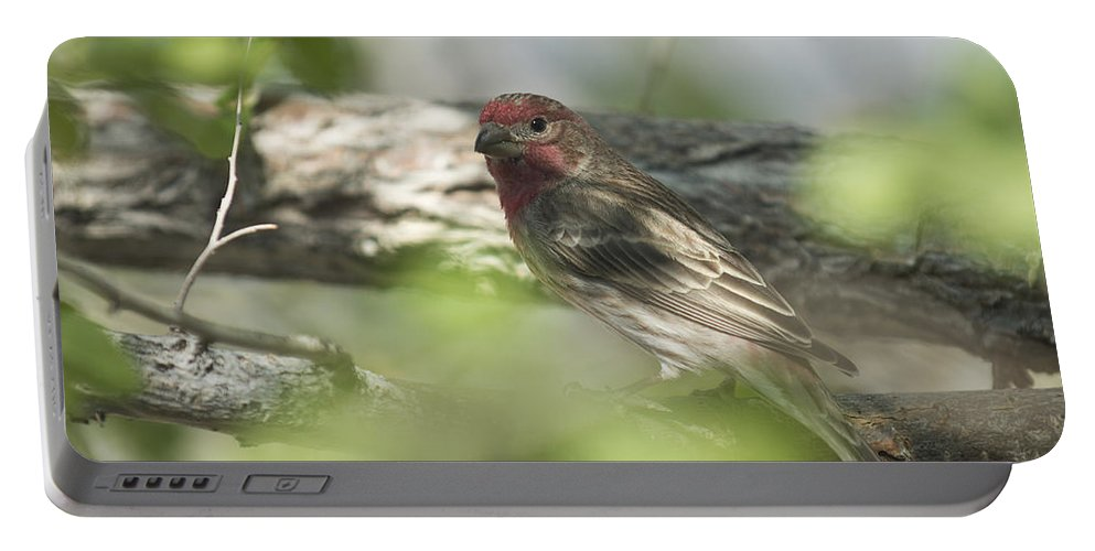 Bird Portable Battery Charger featuring the photograph Male House Finch by Dianne Phelps