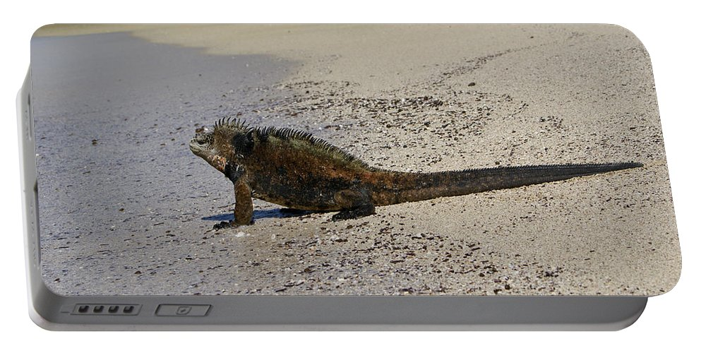 Galapagos Islands Portable Battery Charger featuring the photograph Male Iguana Preparing For A Swim by Brian Kamprath