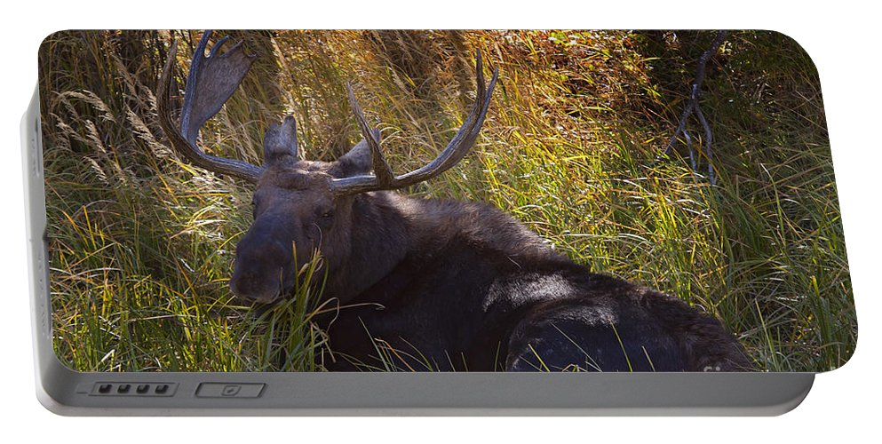 Moose Portable Battery Charger featuring the photograph Male Moose  #3865 by J L Woody Wooden