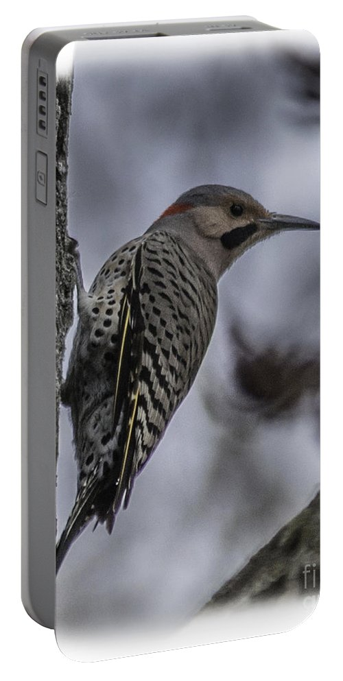 Northern Flicker Portable Battery Charger featuring the photograph Male - Northern Flicker by Ronald Grogan