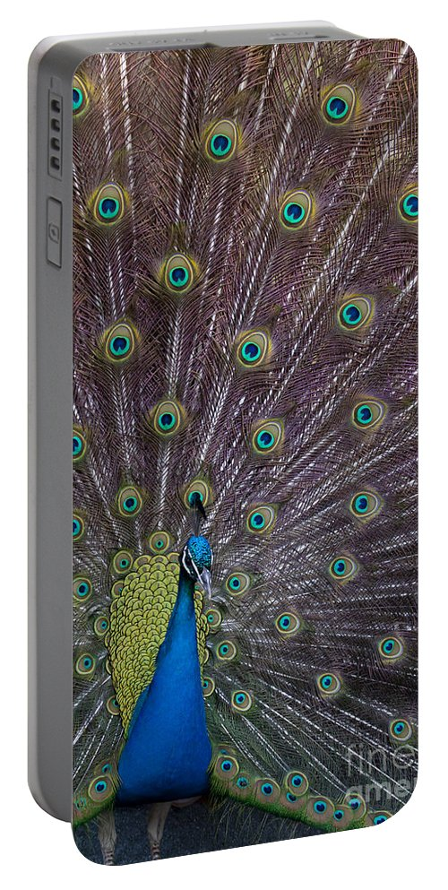 Bird Portable Battery Charger featuring the photograph Male Peacock  #9053 by J L Woody Wooden