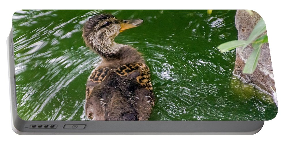 Anas Platyrhynchos Portable Battery Charger featuring the photograph Mallard Duckling by Kate Brown