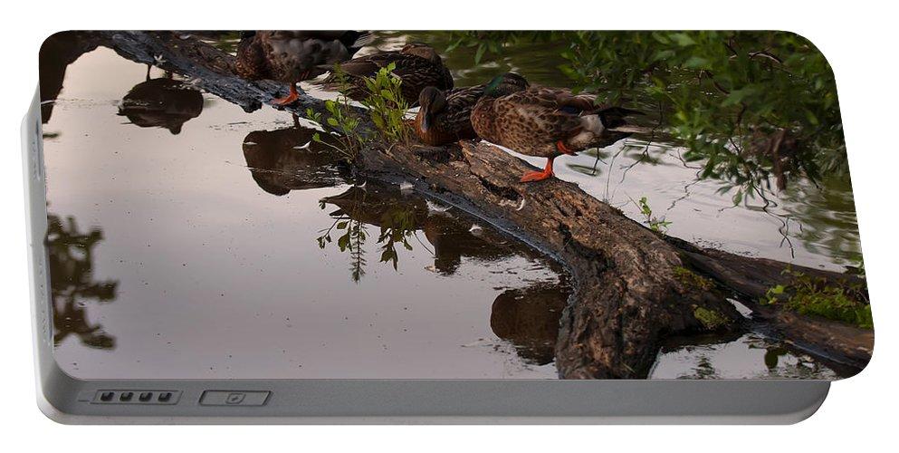 Bird Portable Battery Charger featuring the photograph Mallard Ducks Sleeping On A Log by Chris Flees