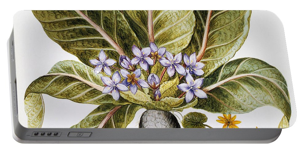 1613 Portable Battery Charger featuring the photograph Mandrake And Buttercup by Granger